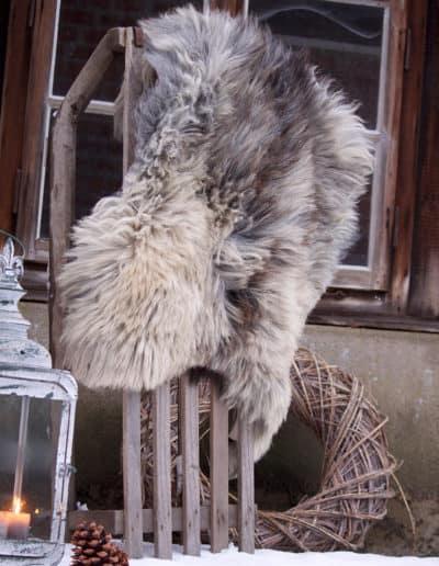 Heidschnucke_winter