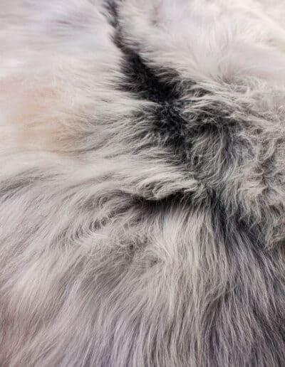 Groenlandschnucke-149-0882