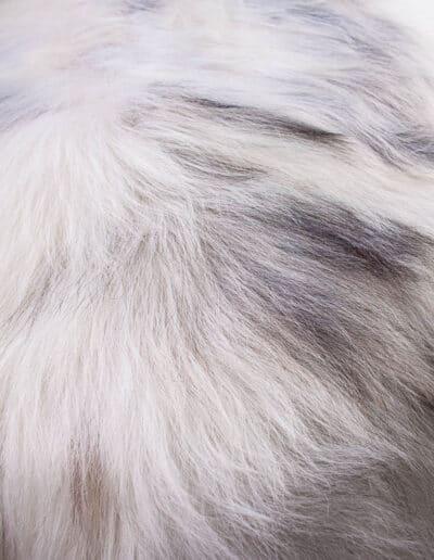 Groenlandschnucke-150-0816