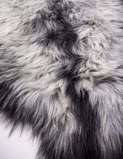 Wollschaf-1-38-0406