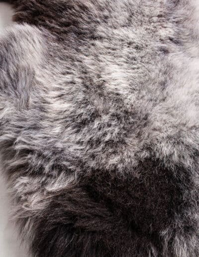 Wollschaf-152-0565
