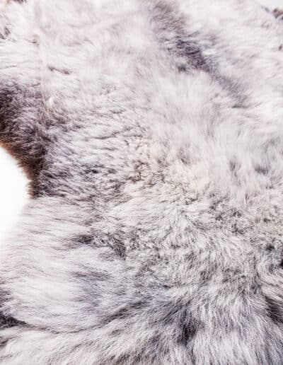 Wollschaf-152-0566