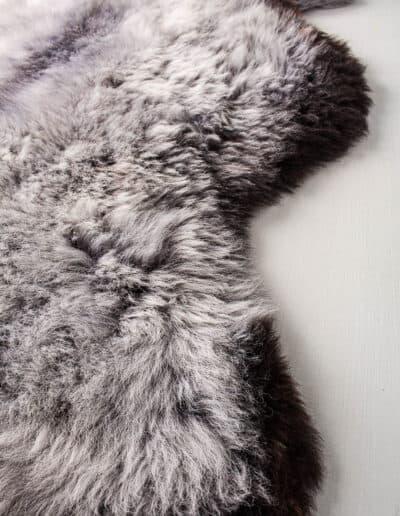 Wollschaf-152-0568