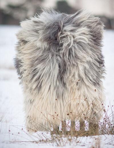FHVF_Winter_Heide-5649-75